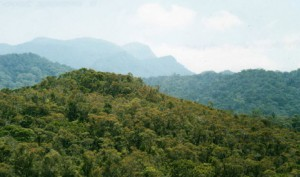Central African tropical forests becoming browner