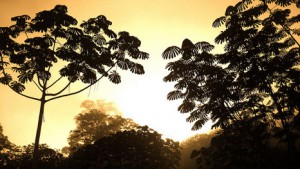 Congo deforestation could cause region to warm 3C by 2050